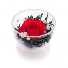 Цветы в стекле Огонек